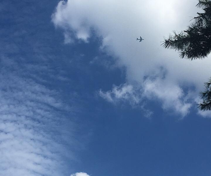 野川公園の空
