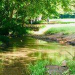 野川公園の水遊びなら「わき水広場」で!アクセスや駐車場も紹介