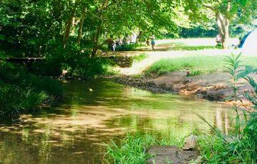 野川公園わき水広場の画像