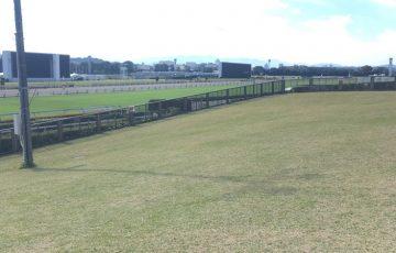 東京競馬場の芝生