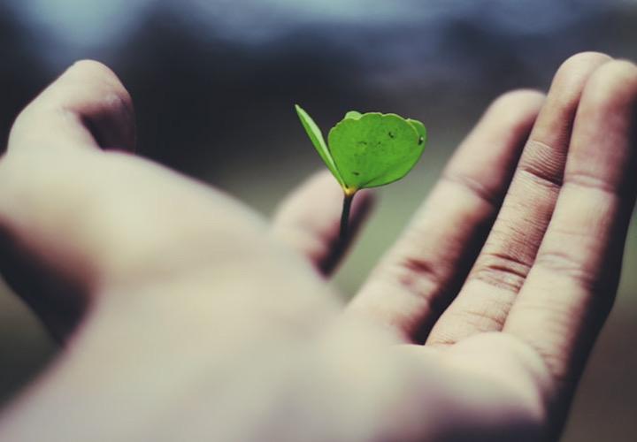 手のひらに乗っている葉